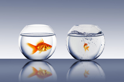 Denken als een vis in het water